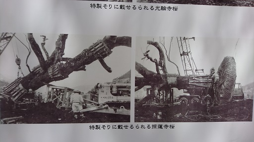 DSC_0480.JPG