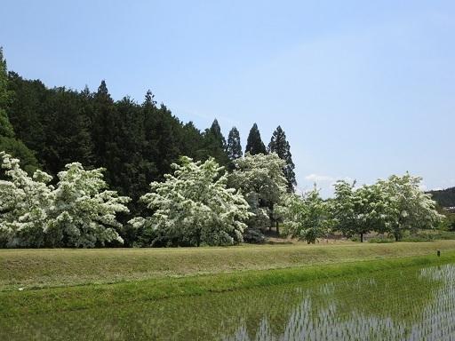 IMG_3338 - コピー.JPG